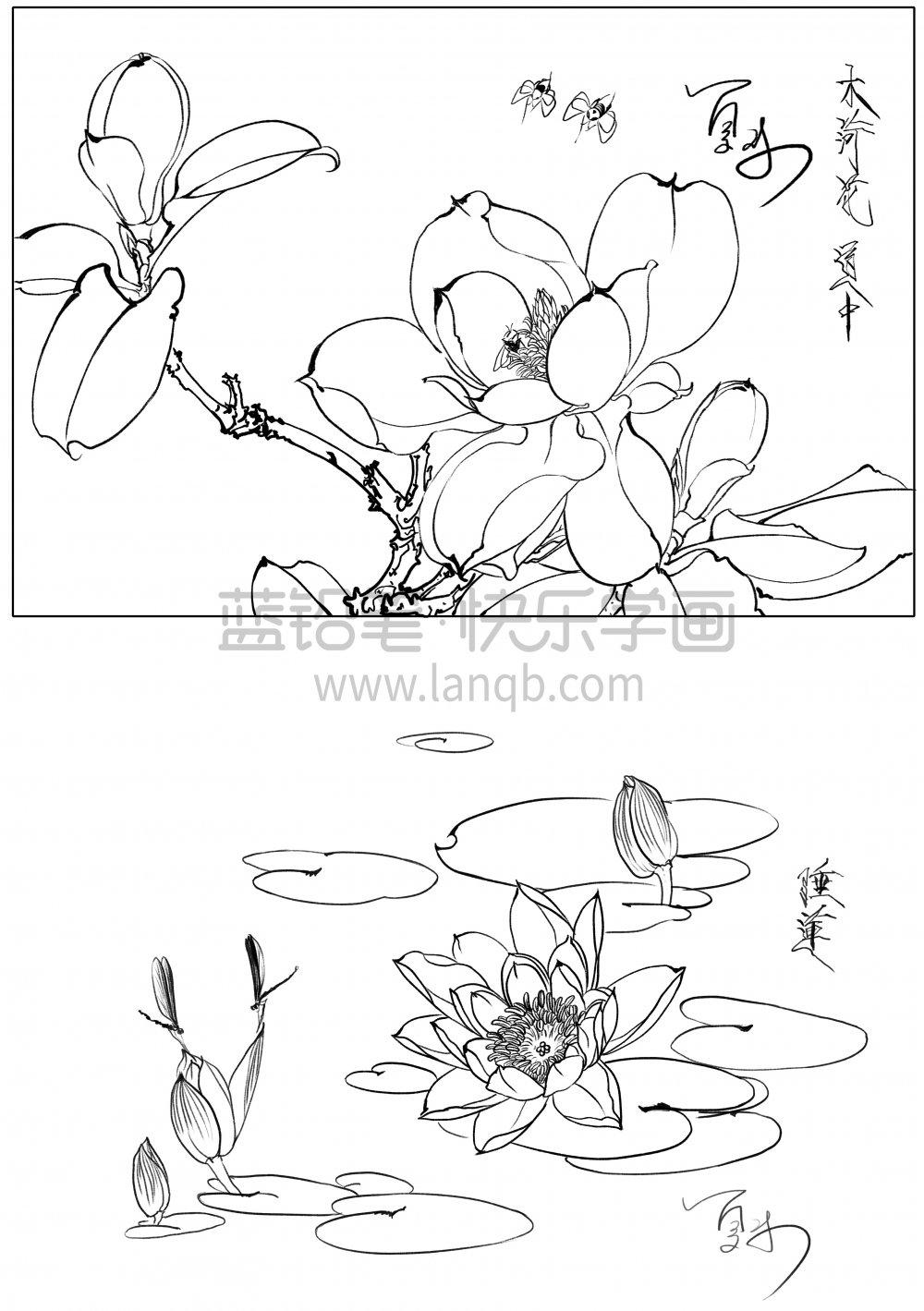 临摹花卉练习3.jpg
